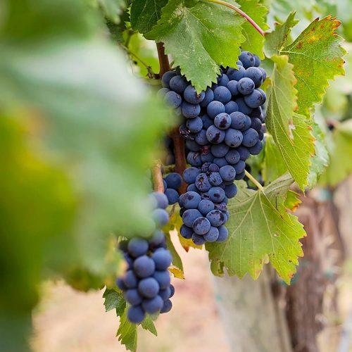 180 Balazuc Ardèche gîte charme vue panoramique jacuzzi gastronomie vignerons terroir