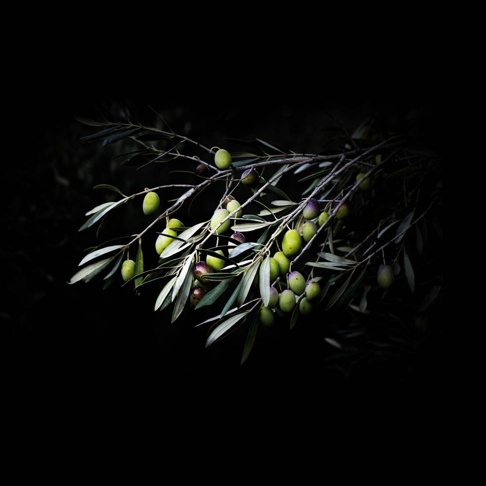 180 Balazuc Ardèche gîte charme vue panoramique jacuzzi huile olive bio produits régionaux terroir