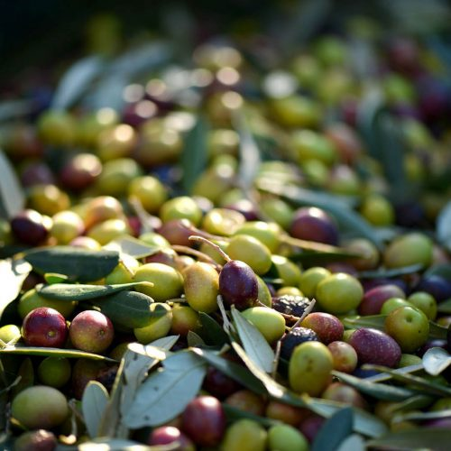 180 Balazuc Ardèche gîte charme vue panoramique jacuzzi provence olives